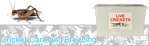 Cricket Care and Breeding